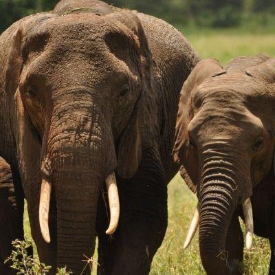 Tarangire Elephant family