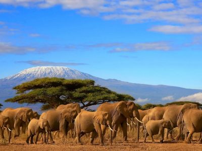 Tontu Safaris Tanzania Northern Deep Adventurer 7 Days
