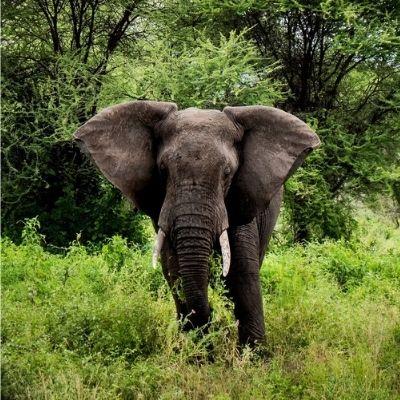 Nyerere Elephant