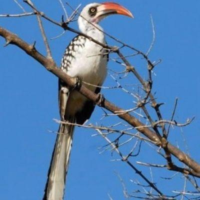 Ruaha rare bird life