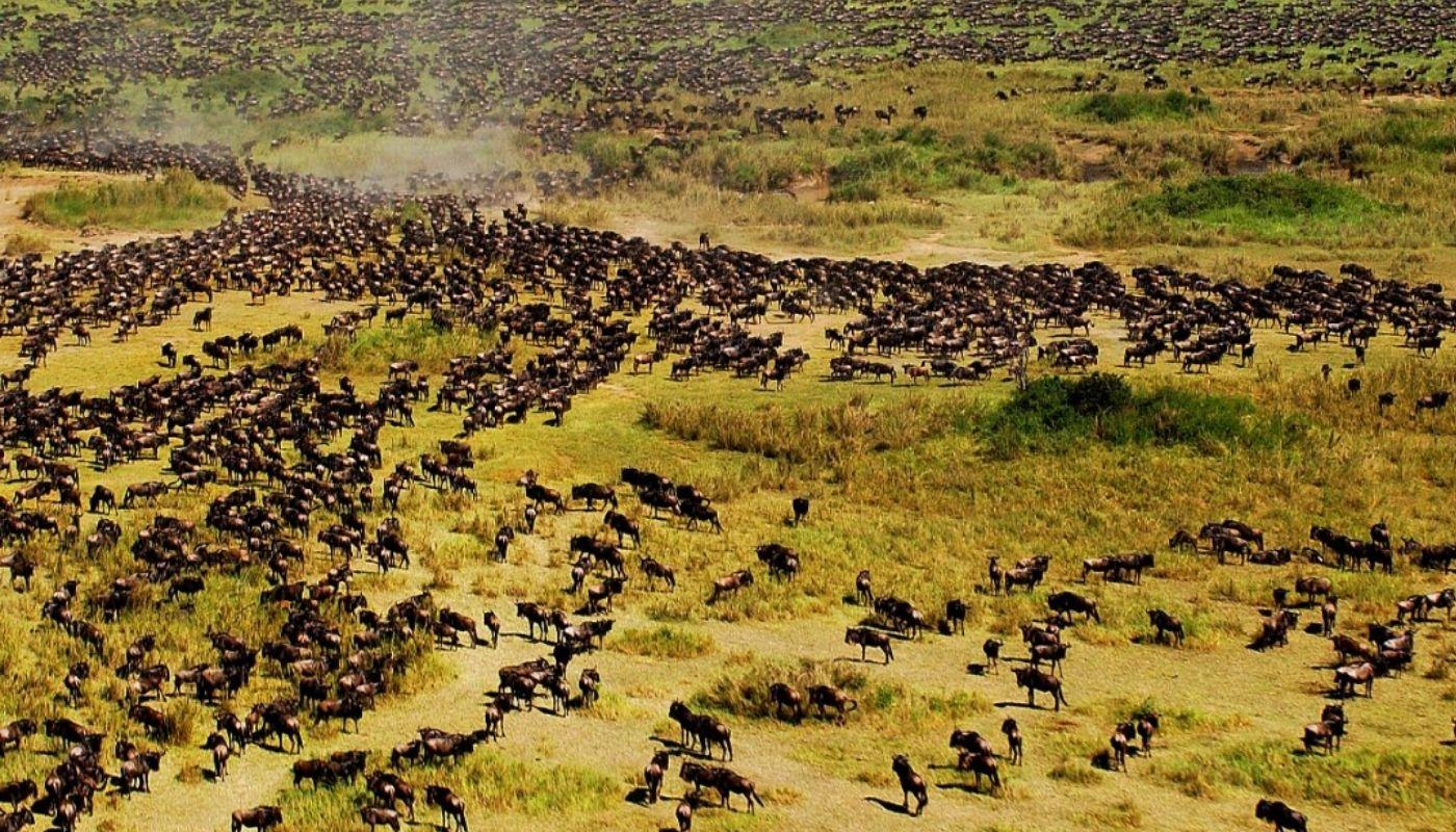 The Serengeti National Park, Tanzania