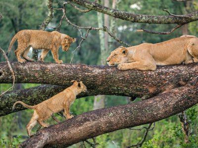 Lake Manyara Tontu Safaris