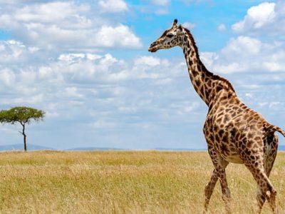 Serengeti Tontu Safaris